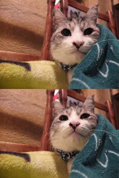 旅する猫_a0180681_15103581.jpg