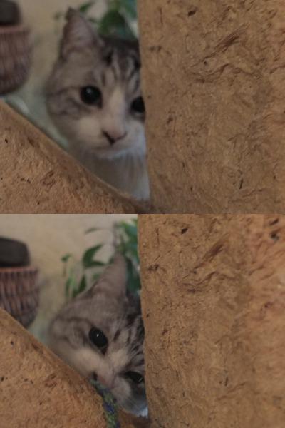 旅する猫_a0180681_159781.jpg