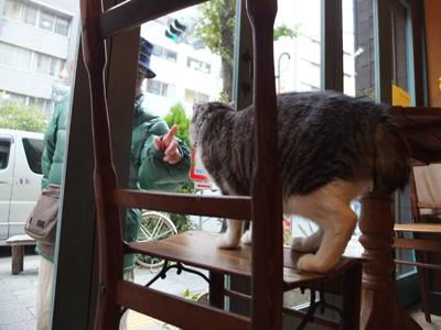 旅する猫_a0180681_2073247.jpg