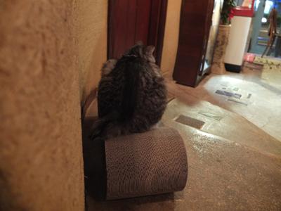 旅する猫_a0180681_2219513.jpg