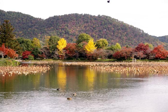 晩秋の京都 5_b0093088_10564549.jpg
