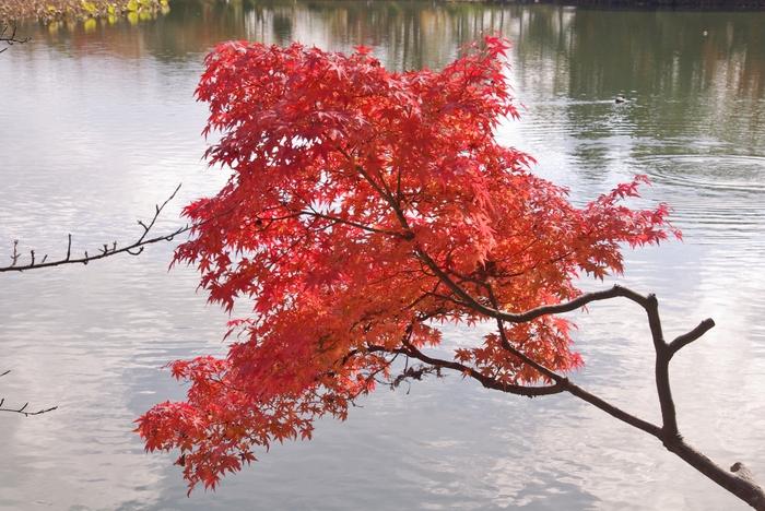 晩秋の京都 5_b0093088_10574220.jpg