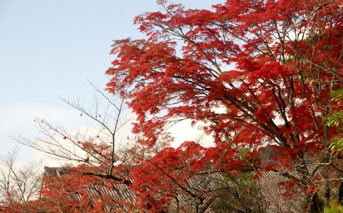 晩秋の京都 5_b0093088_10594234.jpg