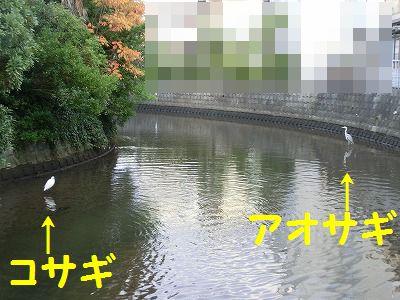 e0222588_176165.jpg