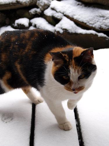 雪降り大工_f0236291_11481531.jpg