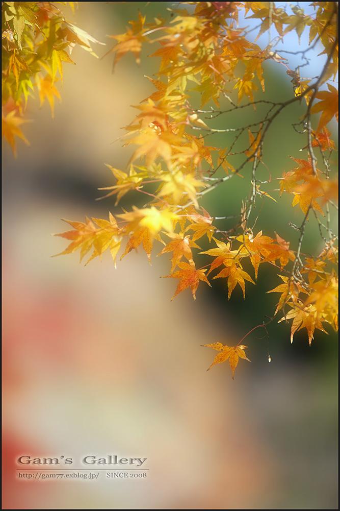 面影を胸に_f0195893_7561880.jpg