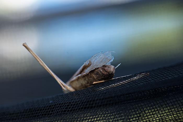 私設昆虫記-193 生と死の差分_f0215695_1036263.jpg