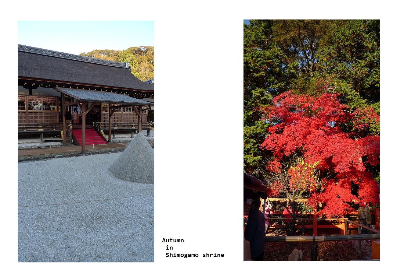 上賀茂神社_a0188798_2025976.jpg