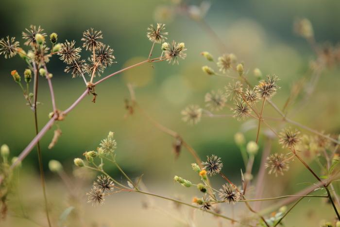 秋の叙景_e0135098_22285753.jpg