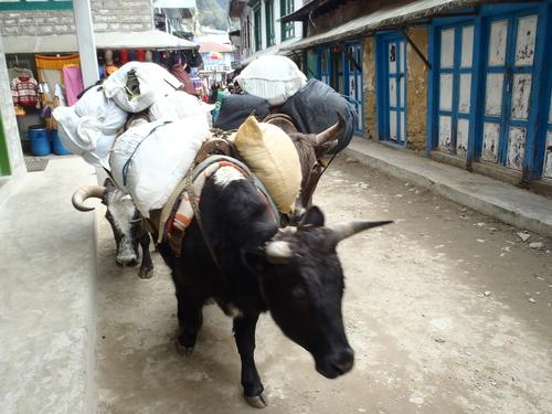 ネパール遠征〜動植物〜_c0206900_14591148.jpg