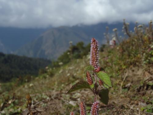 ネパール遠征〜動植物〜_c0206900_1501922.jpg
