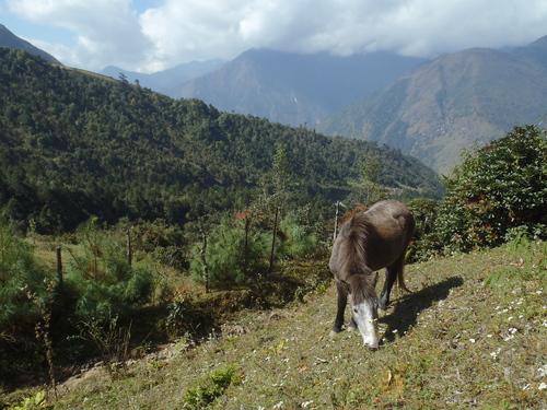 ネパール遠征〜動植物〜_c0206900_150722.jpg