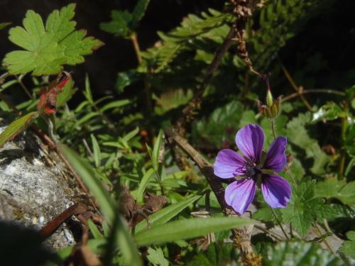 ネパール遠征〜動植物〜_c0206900_15175235.jpg