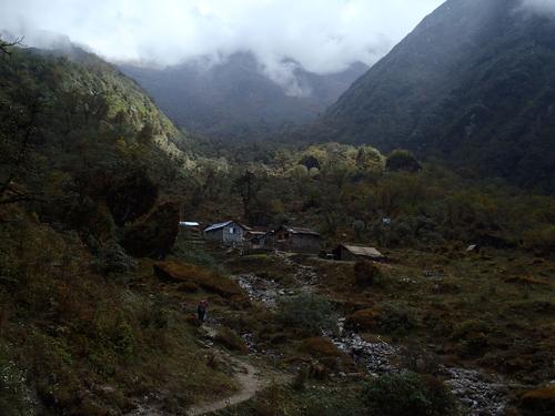 ネパール遠征〜動植物〜_c0206900_15247.jpg