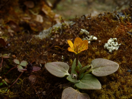 ネパール遠征〜動植物〜_c0206900_153230.jpg