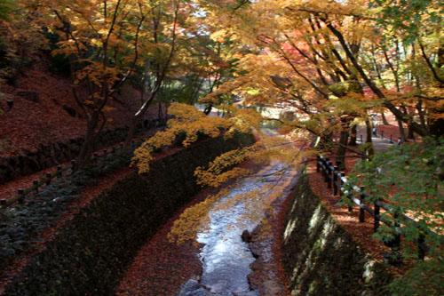 紅葉だより60 北野天満宮_e0048413_2271571.jpg