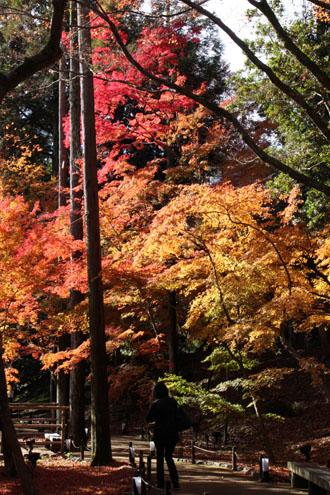 紅葉だより60 北野天満宮_e0048413_2274488.jpg