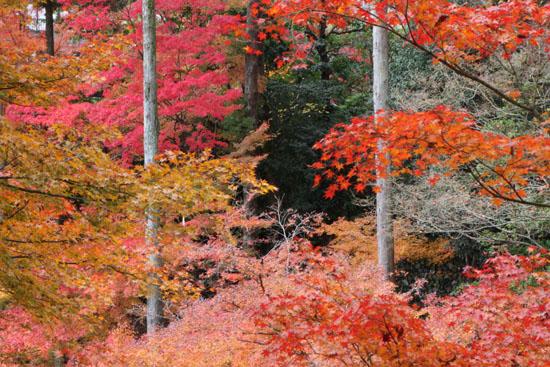 紅葉だより60 北野天満宮_e0048413_2275846.jpg
