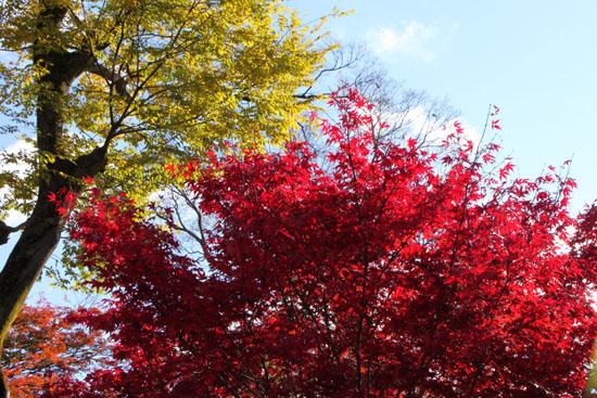 紅葉だより60 北野天満宮_e0048413_2282171.jpg