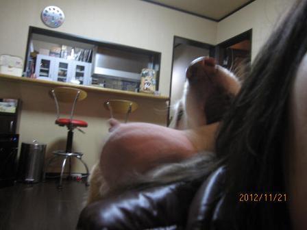 e0136815_1812660.jpg