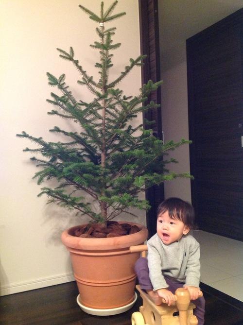 クリスマス支度開始~!_e0253026_7193250.jpg