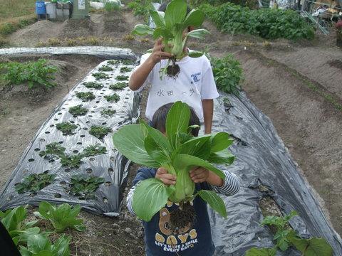 我が家の畑27 収穫_d0191262_18555041.jpg