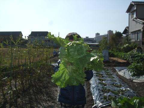 我が家の畑27 収穫_d0191262_18561030.jpg