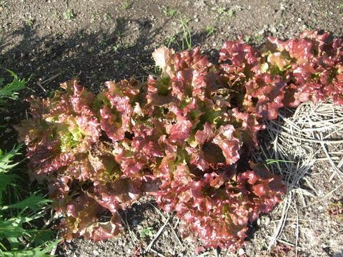我が家の畑27 収穫_d0191262_18565177.jpg