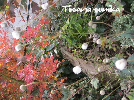 小さな庭の紅葉(2)_a0243064_14182065.jpg