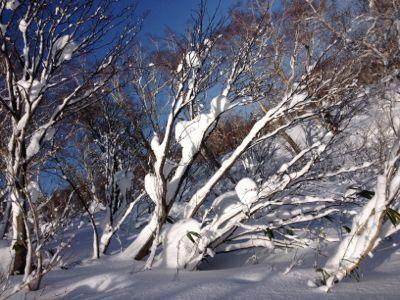 北海道三日目☆札幌国際スキー場_c0151965_16281934.jpg