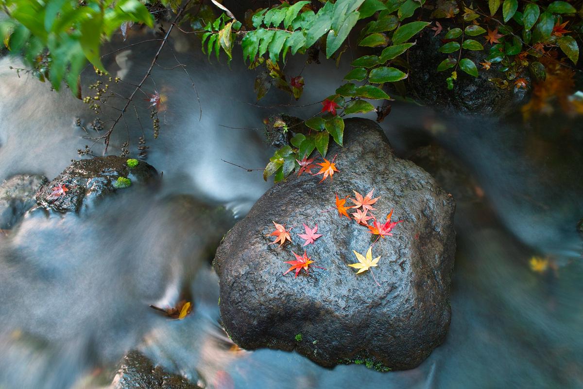 Foveon de 紅葉 2012 IN 万博公園_f0021869_2338448.jpg