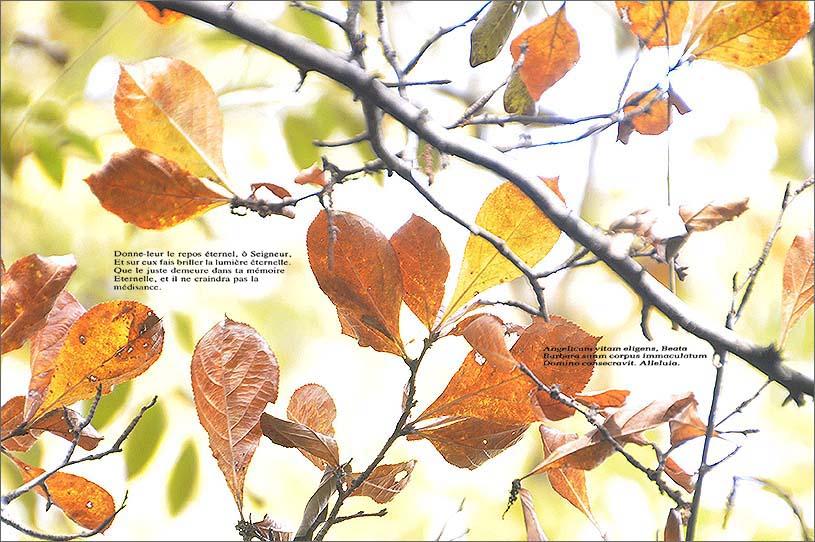 f0198771_010363.jpg