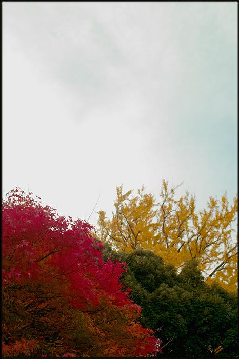 そうだ、紅葉を見よう。_a0281778_22112497.jpg