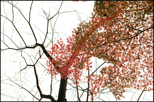 そうだ、紅葉を見よう。_a0281778_2212336.jpg