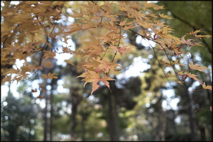 そうだ、紅葉を見よう。_a0281778_2213597.jpg