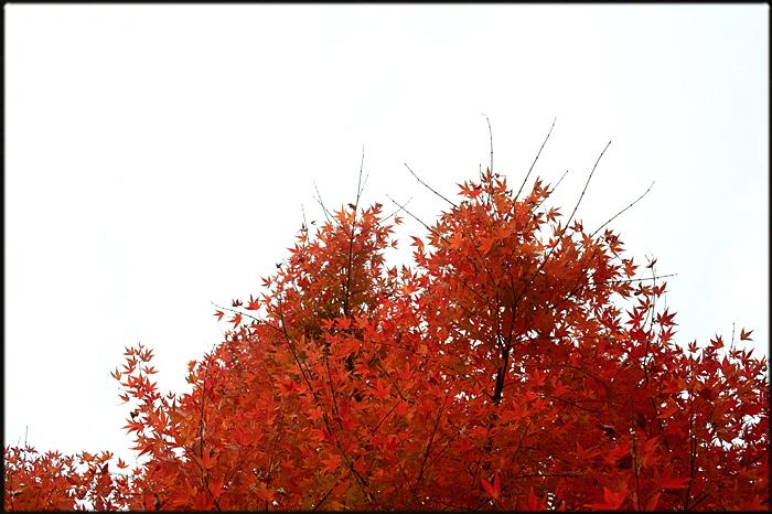 そうだ、紅葉を見よう。_a0281778_22143693.jpg