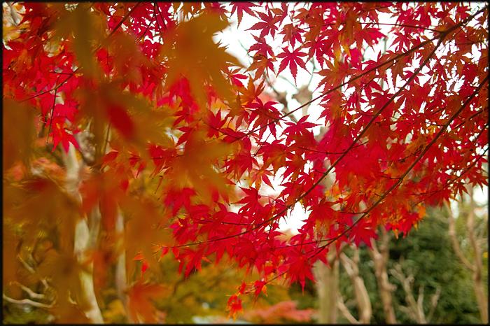 そうだ、紅葉を見よう。_a0281778_2215818.jpg