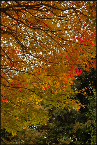 そうだ、紅葉を見よう。_a0281778_22172595.jpg