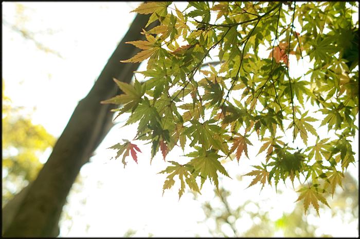 そうだ、紅葉を見よう。_a0281778_228184.jpg