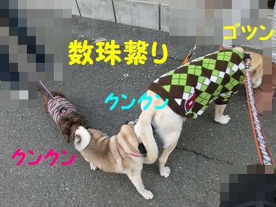 日替わりお天気_e0222588_1775936.jpg