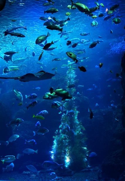 新江ノ島水族館 海のクリスマス ミズクラゲのクリスマスツリー_b0145398_0312143.jpg