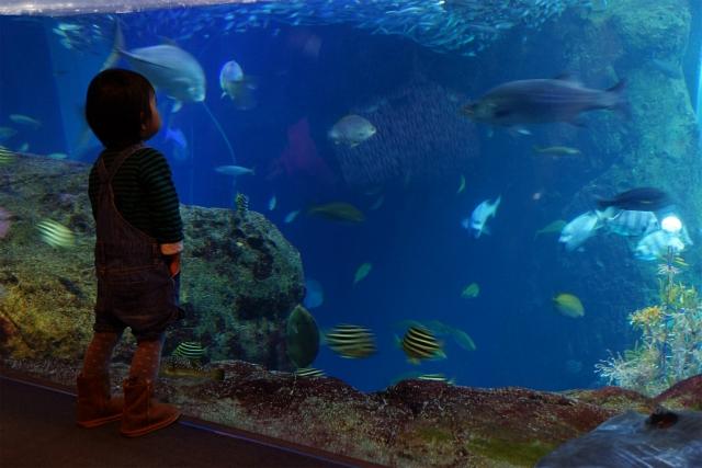 新江ノ島水族館 海のクリスマス ミズクラゲのクリスマスツリー_b0145398_034469.jpg
