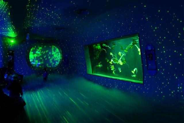 新江ノ島水族館 海のクリスマス ミズクラゲのクリスマスツリー_b0145398_040572.jpg