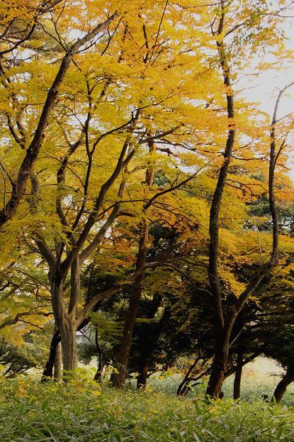 '12年 大宮公園の紅葉_d0150720_83869.jpg