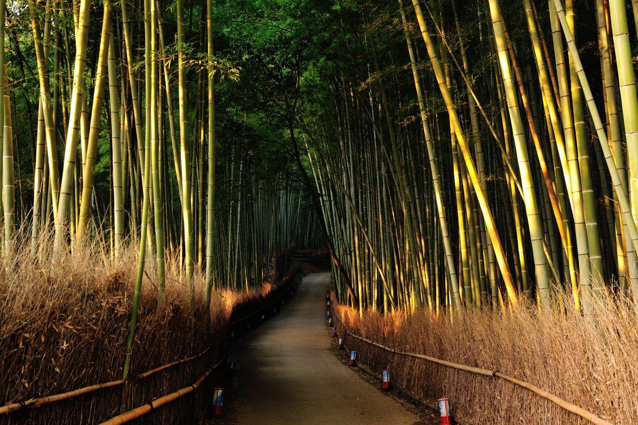 京都報告 その1_c0220824_8463089.jpg