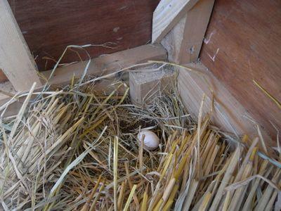 二日目も産卵!_c0063348_53773.jpg