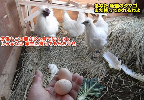 二日目も産卵!_c0063348_537732.jpg