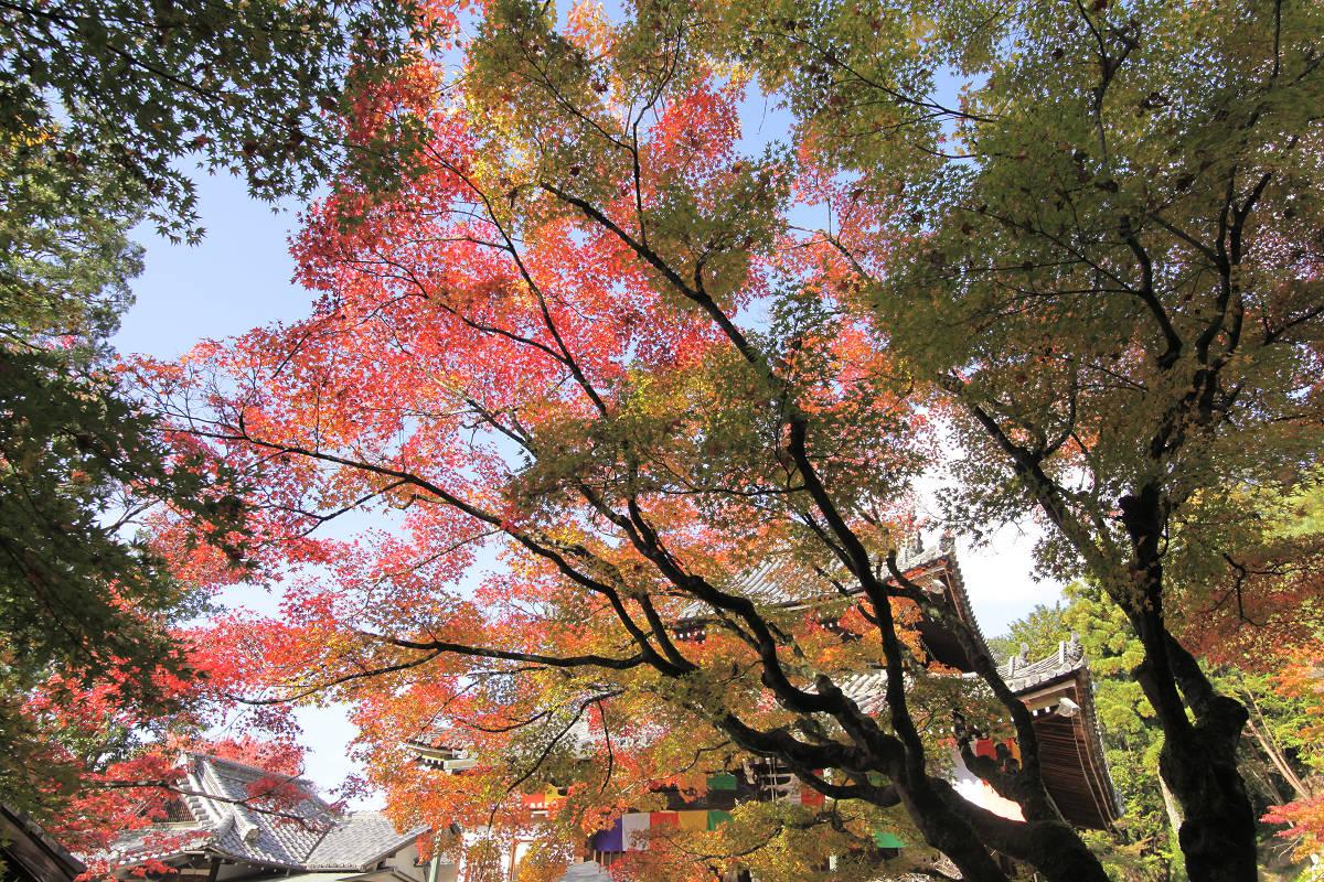 紅葉 2012  東山  今熊野観音寺_f0021869_22184671.jpg