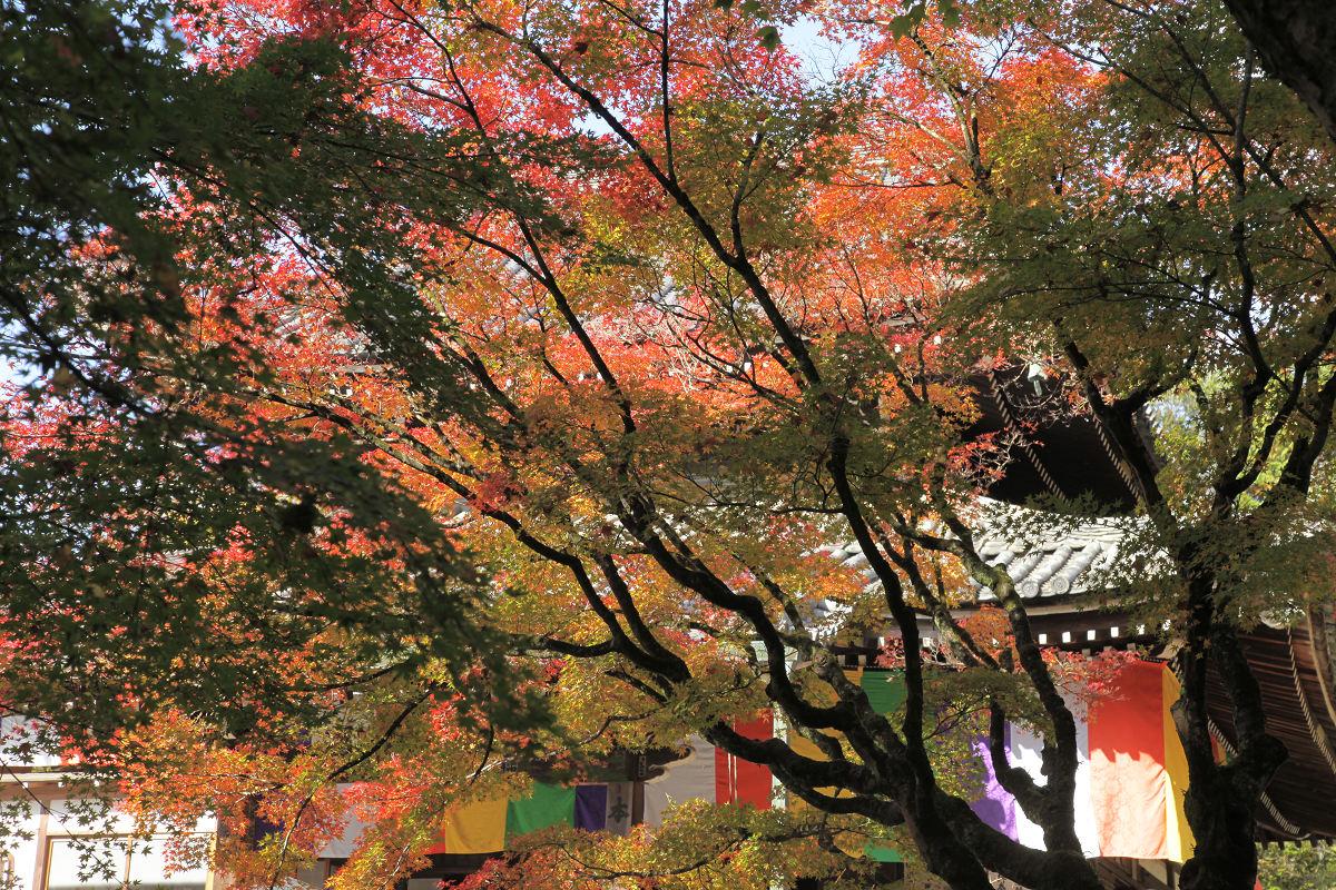 紅葉 2012  東山  今熊野観音寺_f0021869_22205215.jpg