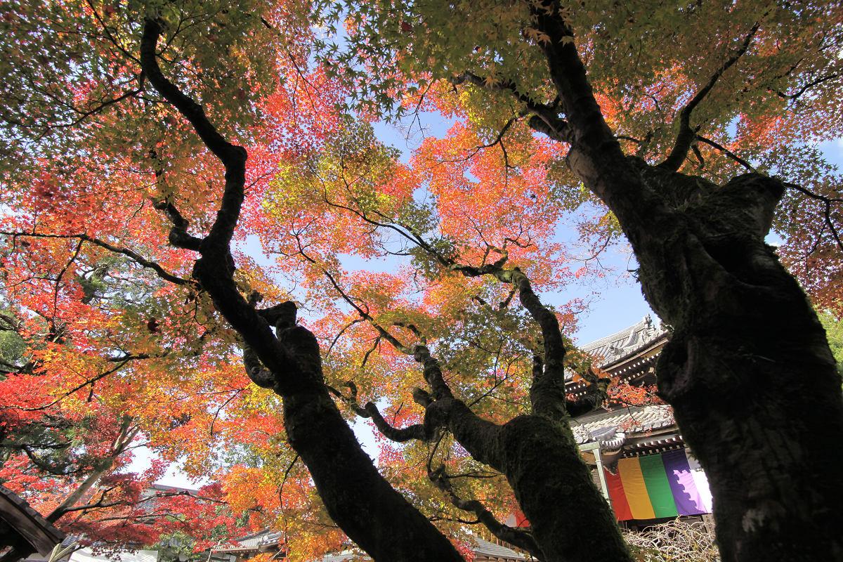 紅葉 2012  東山  今熊野観音寺_f0021869_23144596.jpg